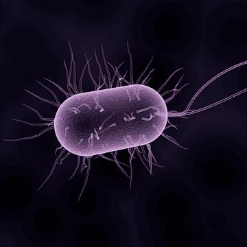 bakterien zahnmedizin