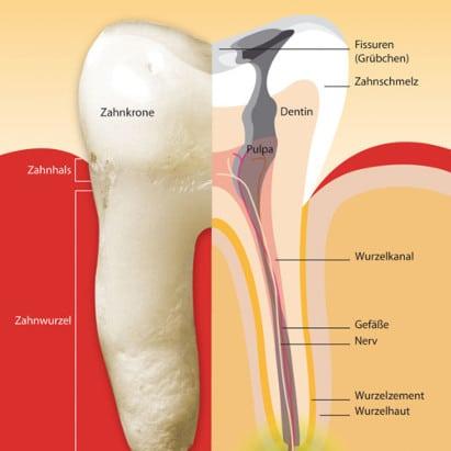 endodontie wurzelbehandlung